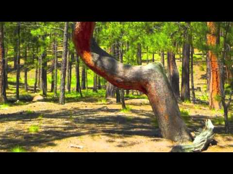 A tour of the Ute Indian Burial Trees of northern El Paso County.