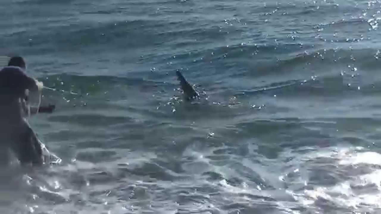 North carolina shark fishing 8 3 sand tiger oct 14 youtube for Shark fishing nc