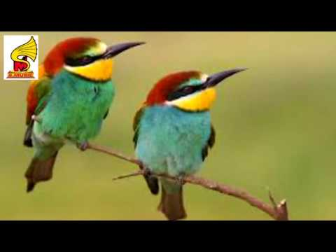 Beautiful Exotic Birds with Relaxing Music and Bird Sounds = Birdl Sound for Children