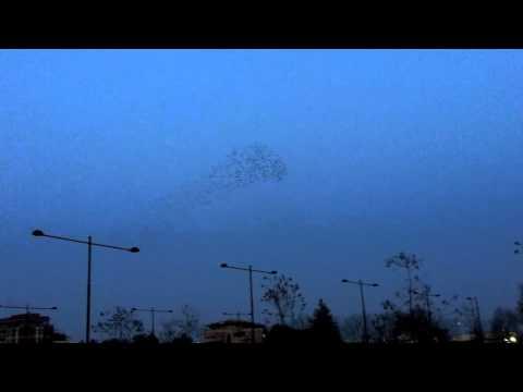 Caribou - Lalibela (Unofficial Video)