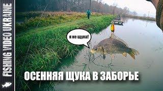 Рыбалка на новом месте | Почему долго нет видео? | Где осенний фидер?