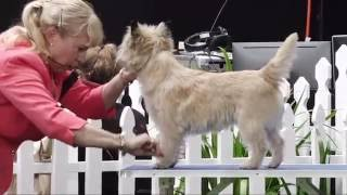 2016 Royal Adelaide Show - Dog Judging Friday 2 September