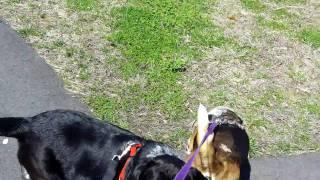 Hush Puppy Nj Obedience Training, Llc