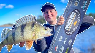 HOW TO WEIGH AΝD MEASURE PERCH | Team Galant