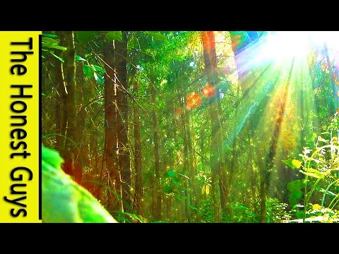 "3 HOURS Of Nature Sounds Sleep Meditation ""Windy Enchanted Forest"" - No Music"