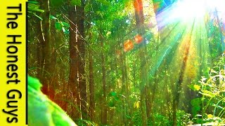 "3 HOURS of Nature Sounds ""Windy Enchanted Forest"" Relax. No Music. Sleep, Study, Meditation"