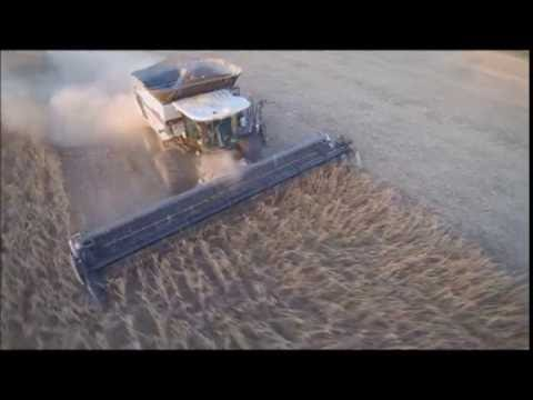 S77 Gleaner Combine, Soybean Harvest And A Drone.