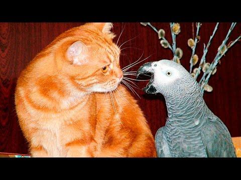 Животные поют видео мультик