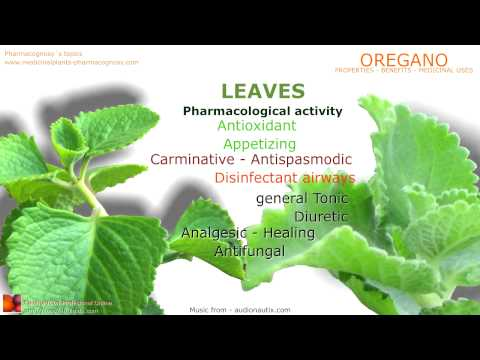 Oregano health benefits. Oregano plant medicinal properties.