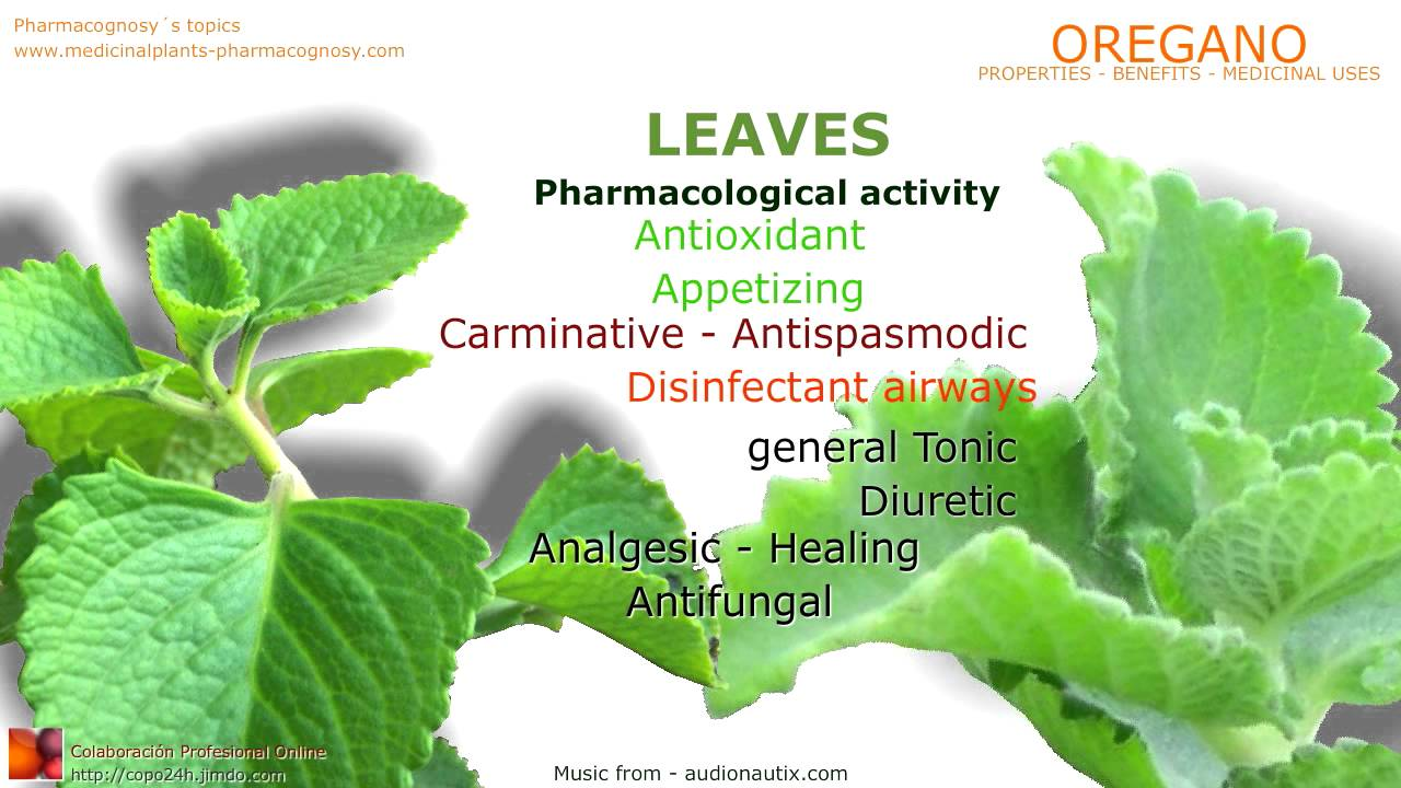 Oregano  Health benefits - Pharmacognosy - Medicinal Plants