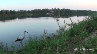 Утро на реке Рассвело Звуки природы Птицы поют Красивая природа Релакс