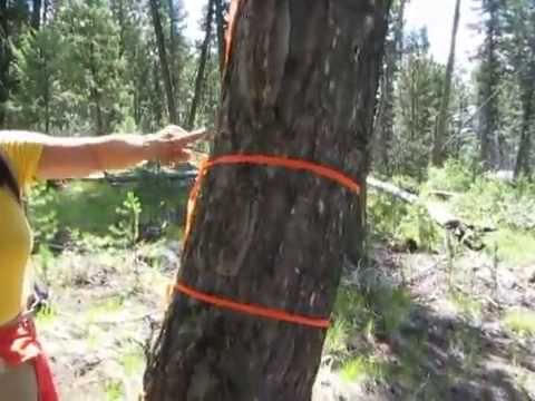 Historic Three Blaze Trail, Frank Church Wilderness, Idaho