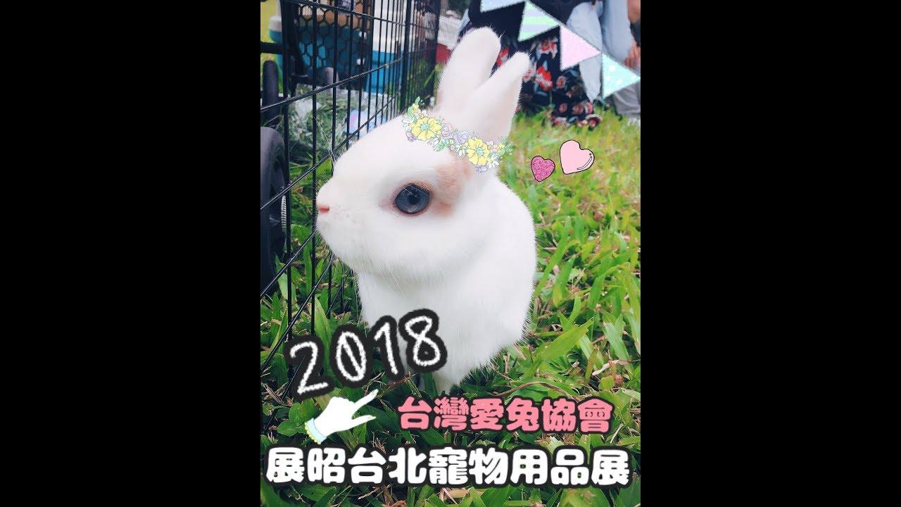 【開箱】2018展昭寵物展-兔兔用品 - YouTube