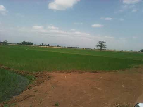 Moshi kilimajaro Tanzania farming