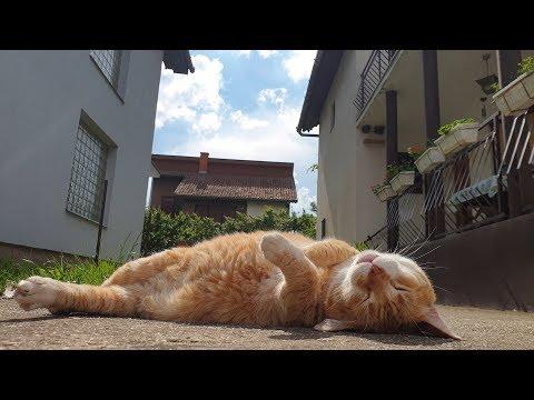 Relaxing Cat Video 59