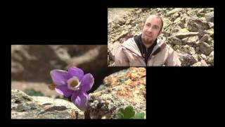 Microclimates and Rare Plants