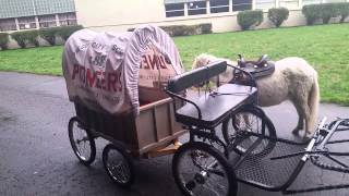 Miniature Horses Pull Covered Wagon for Oregon City High School