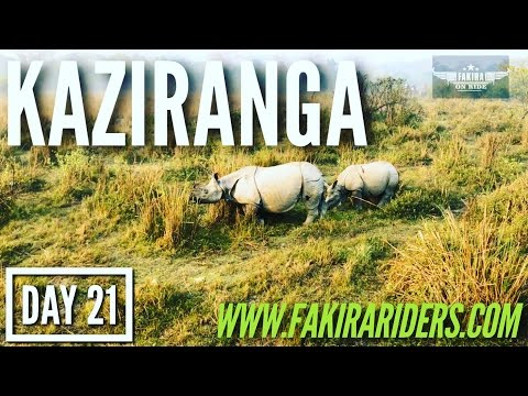 DAY 21 | Kaziranga National Park