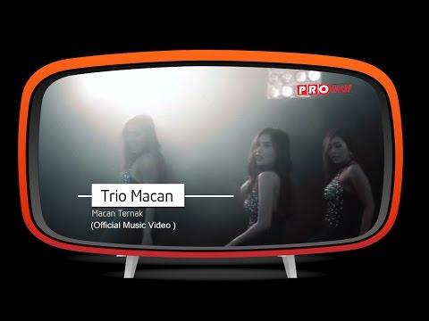 Trio Macan - Macan Ternak