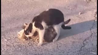 SEX ANIMAL CAT vs CAT