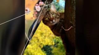 Самые милые картинки котят!!