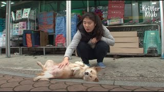 Dog Begs For Food At The Grocery Store Not Just For Herself, But Also For.. (Part 1) | Kritter Klub