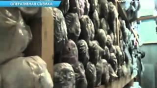 Полицейские обнаружили подпольный цех в МО