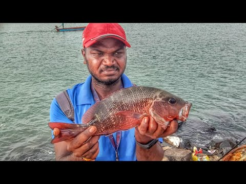 Rod fishing | Chemballi fishing in harbour | catching mangrove jack.