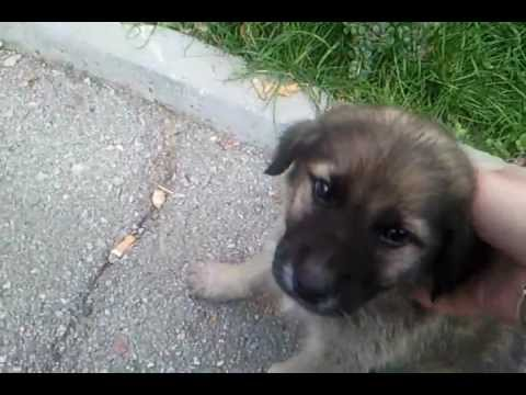 Cutest dog ever (stray puppy)
