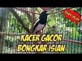 Kacer Gacor Tanpa Iklan Bongkar Materi Ngerol Nembak  Mp3 - Mp4 Download