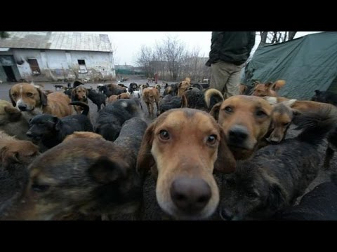 Serbian stray dog advocate fights to save his 450 pooches