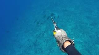 Tuamotu Spearfishing 2016 part1