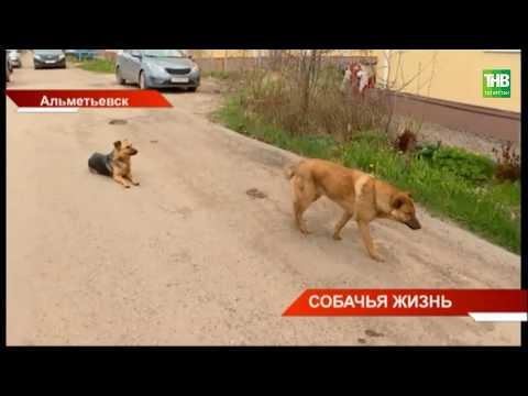 Вопрос: Почему у охотников трофеем становятся бездомные собаки?