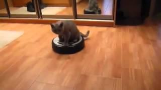 Кошка на робот пылесосе