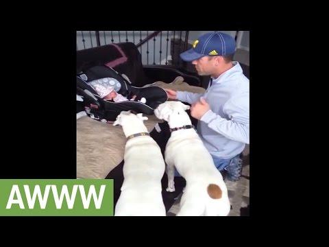 Pair of Boxers meet with newborn baby
