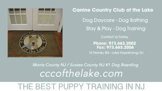 Puppy Training Fredon Nj