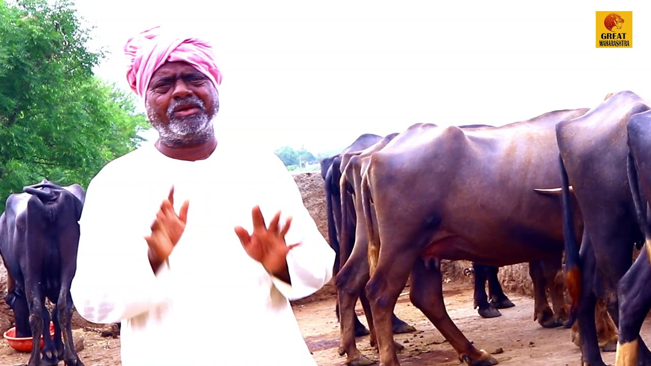 म्हैस पालन व्यवसायातून महिना 15 हजार | यशोगाथा | Buffalo Farming Documentary | covid-19 Maharashtra