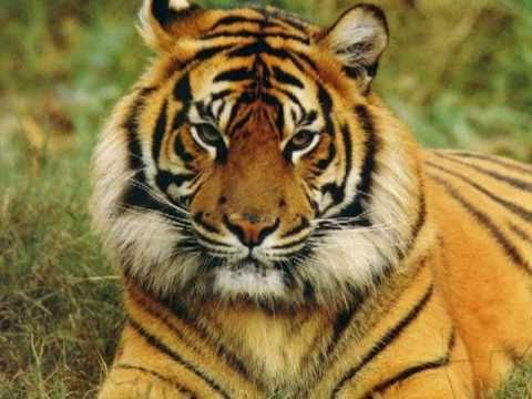 Extrem Animaux de la Savane - YouTube BN44