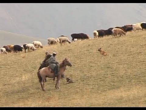 видео: Чабан, или кочевник-пастух. Азия - Благословенный край.
