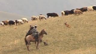 Чабан, или кочевник-пастух. Азия - Благословенный край.