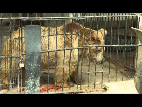 видео: Душанбинский зоопарк
