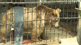 Душанбинский зоопарк