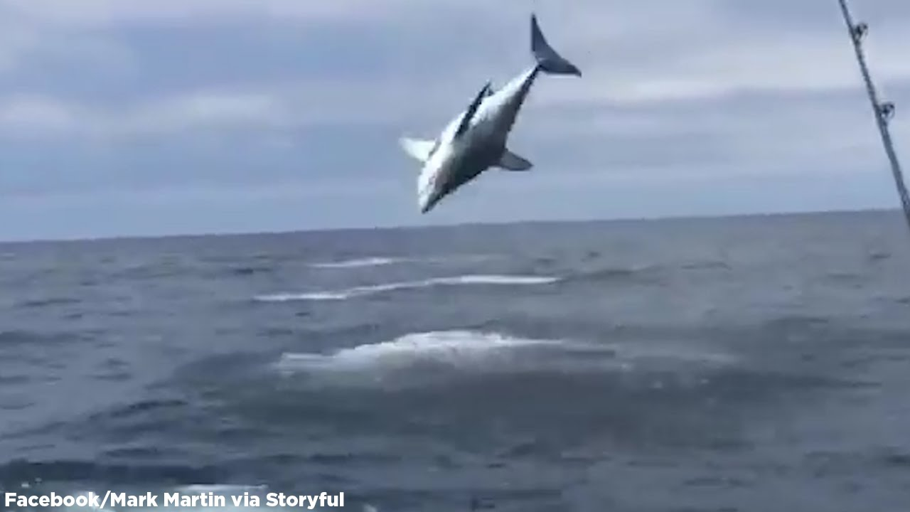 Mako shark hook up