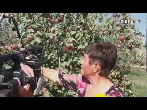 TVRivne1 / Рівне 1: У Новій Любомирці пікетують люди