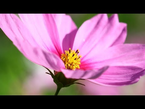 """Peaceful Music, Relaxing Music, Instrumental Music """"Beauty Beneath the Heavens"""" by Tim Janis"""