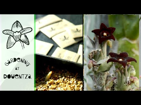 Sowing South African Seeds