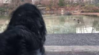 先週は寒くて、この池の表面が凍っていたため、鴨がどこかへ行ってしま...