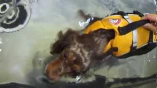 水中トレーニング(水中ケアセラピー)はマッサージだけでは短時間に解...