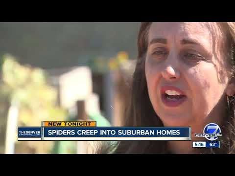 Wolf spiders are popping up in neighborhoods around the Denver metro area