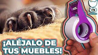 COMO EVITAR QUE MI GATO ARAÑE LOS MUEBLES! | LA GATERÍA TV